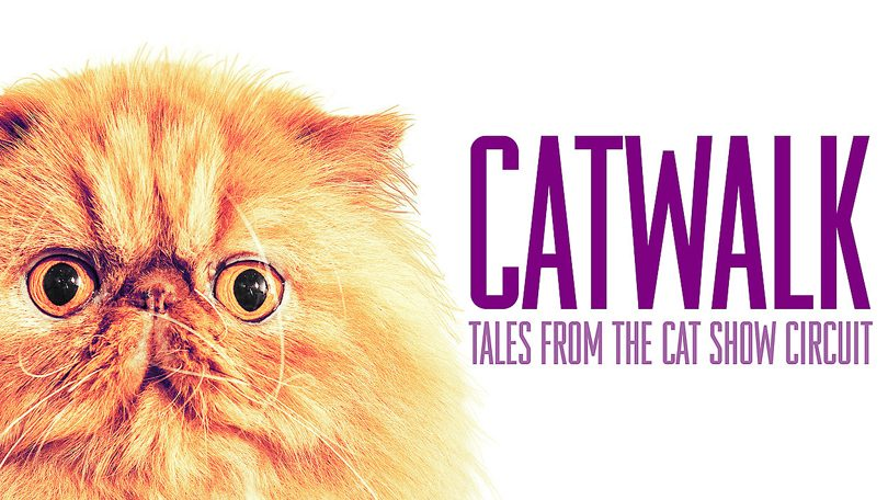 Catwalk Tales from the Cat Show Circuit Netflix